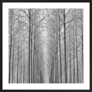 Equilibrium by Doug Chinnery