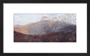 Combestone Wood by Andrew Lansley