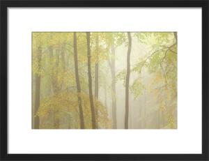 Woodland Mist IV by Doug Chinnery