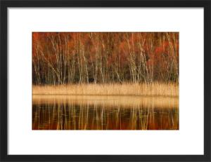 Reflection of Autumn by Fortunato Gatto