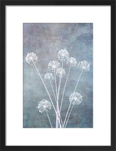 Allium Calm by Doug Chinnery