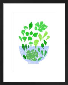 Lettuce by Ana Zaja Petrak