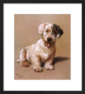 Sealyham Terrier, 1928 by Cecil Aldin