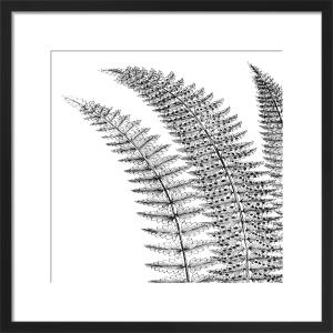 Fern I (on white) by Botanical Series