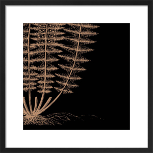 Fern IV (on black) by Botanical Series