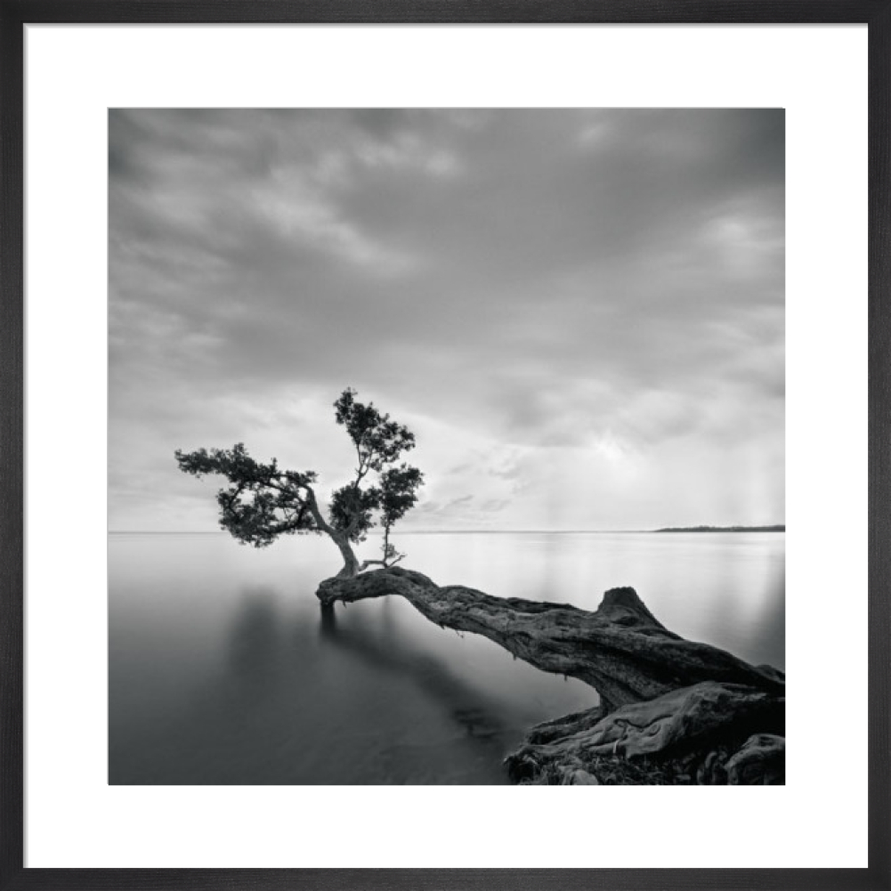 Water Tree Art Print By Moises Levy King Mcgaw