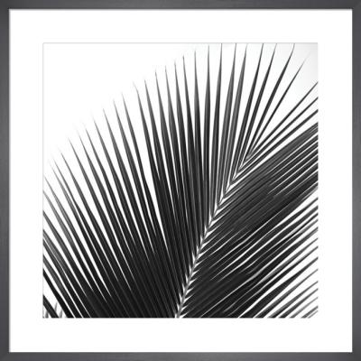 Palms 14 (detail) by Jamie Kingham