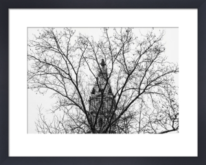 City Hall (branches) by Erin Clark