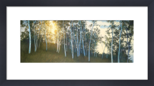 Hillside Birches by Elissa Gore