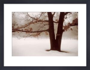 Tranquility by David Lorenz Winston