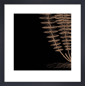 Fern III (on black) by Botanical Series