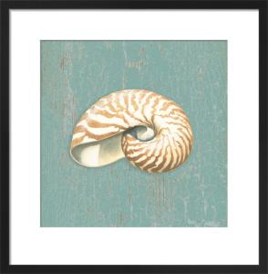Nautilus by Lisa Danielle
