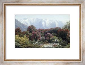 Rhododendrons in Snowy Highlands by Henrik Gamst Jespersen