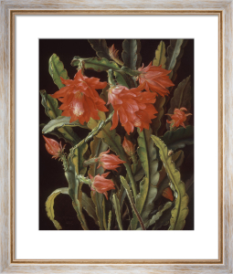 Cactus with Scarlet Blossoms, 1884 by Christian Juel Mollback