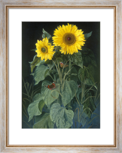 Sunflowers by Niels Fristrup