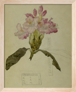 Rhododendron Walberswick, 1915 by Charles Rennie Mackintosh