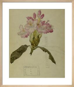 Rhododendron Walberswick, 1915 by Charles Rennie Mackintosh