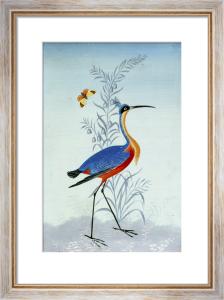Uccelli Esotici by Carlo Antonio Raineri