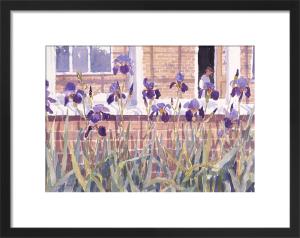 Irises by Lucy Willis
