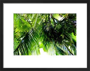 Jungle by Deborah Schenck