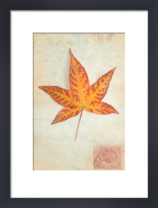 Leaf 1 by Deborah Schenck
