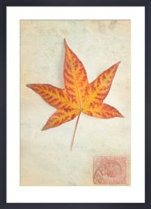 Leaf 1 by Deborah Schenck