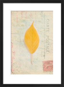 Leaf 3 by Deborah Schenck
