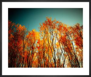 Autumn Fire by Robert Cadloff