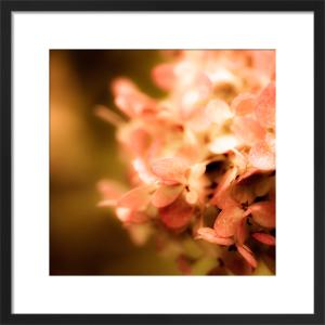 Pink by Robert Cadloff