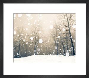Winter by Robert Cadloff