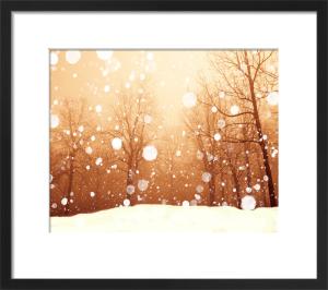 Winter red by Robert Cadloff