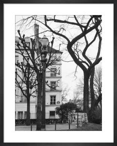 Winter Trees - Rue St-Julien le Pauvre, Paris 1963 by Alan Scales