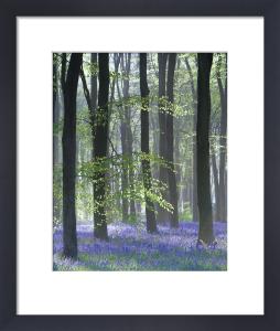 Bluebell Wood II by Doug Chinnery