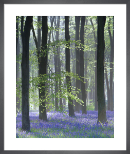 Bluebell Wood II by Doug Chinnery