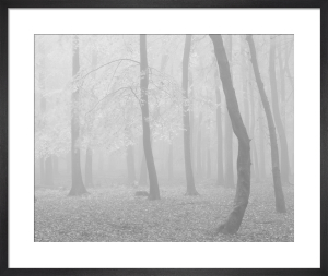 Gentle Morning by Doug Chinnery