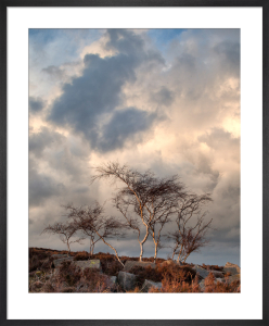 Silver Birch, Derbyshire by Doug Chinnery