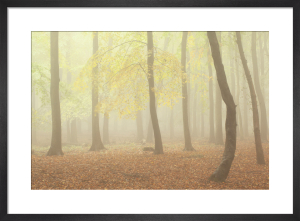 Woodland Dreams II by Doug Chinnery