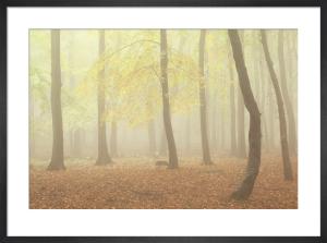 Woodland Dreams II by Doug Chinnery