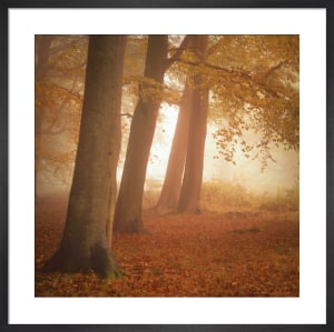 Woodland Dreams by Doug Chinnery