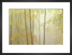 Woodland Mist IV by Doug Chinnery