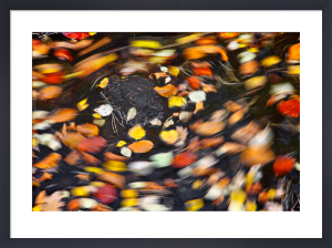 Psychedelic Autumn by Fortunato Gatto