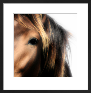 Pony Study III by Chris Tancock