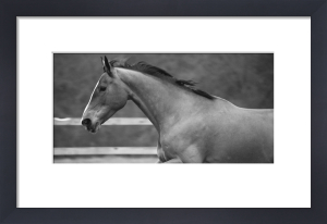 Wayside Stables Panoramic by Luru Wei