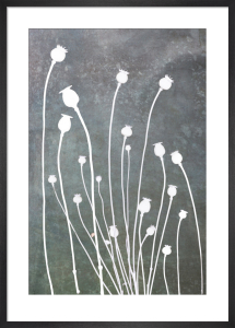 Poppy Study in Slate by Doug Chinnery