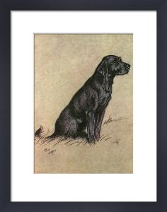 Black Labrador, 1928 by Cecil Aldin