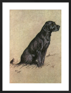 Black Labrador, 1928 by Cecil Aldin