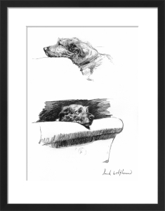 Sketches of an Irish Wolfhound, 1939 by Cecil Aldin