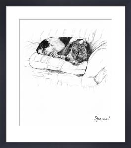 Spaniel, 1939 by Cecil Aldin