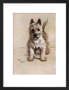 Norwich Terrier, 1928 by Cecil Aldin