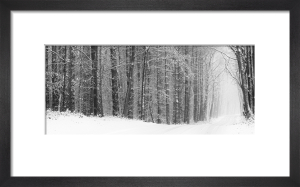 A Passage into Winter by Doug Chinnery